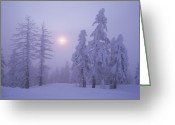 Winter Trees Greeting Cards - Snow Blankets Trees On Diamond Peak Greeting Card by Phil Schermeister
