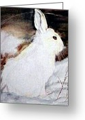 Hare Drawings Greeting Cards - Snow Bunny Greeting Card by Debra Sandstrom