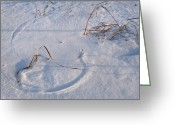 Prairie Native Greeting Cards - Snow Covered Prairie Greeting Card by Steve Gadomski