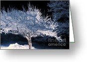 Tree-covered Greeting Cards - Snow-covered Tree At Night Greeting Card by HD Connelly