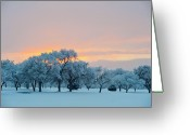 Albuquerque Greeting Cards - Snow Covered Trees At Sunset Greeting Card by Nancy Newell