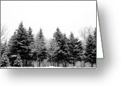 Covering Greeting Cards - Snow Covered Trees Greeting Card by Gail Shotlander