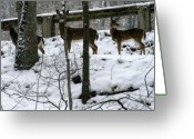 Washington D.c. Pyrography Greeting Cards - Snow Deer - Rock Creek Park Washington DC Greeting Card by Fareeha Khawaja