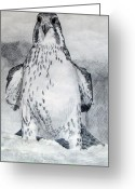 Falcon Drawings Greeting Cards - Snow Falcon Greeting Card by John Muir