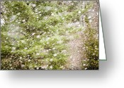 Flurries Greeting Cards - Snow Falling In Front Of Pines Greeting Card by Tim Laman