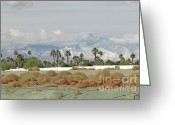 Barks Greeting Cards - Snow in the Desert Greeting Card by Deborah Smolinske