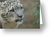 Leopards Greeting Cards - Snow Leopard 8 Greeting Card by Ernie Echols