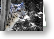 Black Leopard Greeting Cards - Snow Leopard I Greeting Card by Jai Johnson