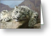 Leopards Greeting Cards - Snow Leopard Relaxing Greeting Card by Ernie Echols