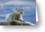 Leopards Greeting Cards - Snow Leopard Greeting Card by Sandy Keeton