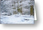 Winter Trees Greeting Cards - Snow Magic Greeting Card by Ann Garrett