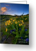 Balsamroot Greeting Cards - Snow Mountain Sunset Greeting Card by Mike  Dawson