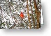 Cardinals. Wildlife. Nature. Photography Greeting Cards - Snow Perch Greeting Card by Jennifer Wosmansky