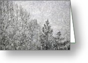 Winter Trees Greeting Cards - Snow Squawl Greeting Card by Laura Mountainspring
