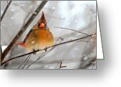 Cardinals In Snow Greeting Cards - Snow Surprise Greeting Card by Lois Bryan