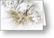Snow Storm Greeting Cards - Snow Whiskers Greeting Card by Julie Palencia
