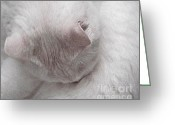 Janeen Wassink Searles Greeting Cards - Snow White Cat Greeting Card by Janeen Wassink Searles
