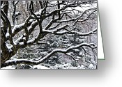 Old Tree Greeting Cards - Snowfall and tree Greeting Card by Elena Elisseeva