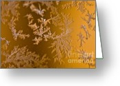 Winter Storm Greeting Cards - Snowflakes Greeting Card by Susan Yates