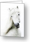 Animal Head Greeting Cards - Snowhite Greeting Card by Gigja Einarsdottir