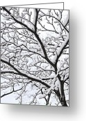 December Greeting Cards - Snowy branch Greeting Card by Elena Elisseeva