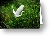 Animal Themes Greeting Cards - Snowy Egret Bird Greeting Card by Shahnewaz Karim