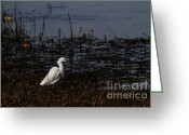 Migrating Bird Greeting Cards - Snowy Egret . Solitude . 7D11965 Greeting Card by Wingsdomain Art and Photography