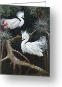 Everglades Greeting Cards - Snowy Egrets Display Their Courtship Greeting Card by Walter A. Weber