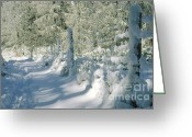 Snowy Tree Greeting Cards - Snowy Footpath in Winter Wonderland Greeting Card by Heiko Koehrer-Wagner