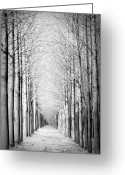 Infinity Greeting Cards - Snowy Forest Greeting Card by by Rafael Zwiegincew