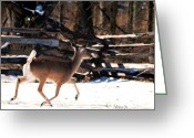 Split Rail Fence Greeting Cards - Snowy Morning Deer Greeting Card by Nava Jo Thompson
