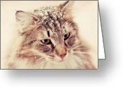 Norwegian Greeting Cards - Snowy Norwegian Forest Cat Greeting Card by Emely Nilsson