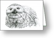 Owl Drawings Greeting Cards - Snowy Owl -Bubo scandiacus Greeting Card by Svetlana Ledneva-Schukina