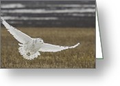 Wildlife Pyrography Greeting Cards - Snowy Owl In Flight Greeting Card by Michaela Sagatova
