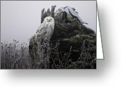 Hunter Photo Greeting Cards - Snowy Owl in the Fog 1 Greeting Card by Andrew Campbell