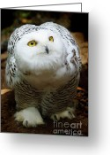 Snowy Night Greeting Cards - Snowy Owl Greeting Card by Jerry L Barrett