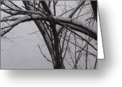 Anna Villarreal Garbis Greeting Cards - Snowy Tree II Greeting Card by Anna Villarreal Garbis