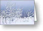 Frost Greeting Cards - Snowy trees Greeting Card by Elena Elisseeva