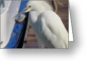 Snowy Night Greeting Cards - Snowy White Egret Greeting Card by Jean Marshall