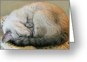 Rescue Animal Greeting Cards - Snugglepuss Greeting Card by Kristin Elmquist