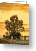 Klondike Greeting Cards - Soaking Up A Sunset Glow Greeting Card by Bill Tiepelman