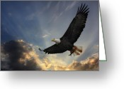 Bald Eagle Digital Art Greeting Cards - Soar to new heights Greeting Card by Lori Deiter