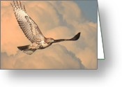 Raptor Greeting Cards - Soaring Hawk Greeting Card by Wingsdomain Art and Photography