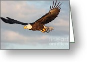 Eagle In Flight Greeting Cards - Soaring with Purpose Greeting Card by Dave Knoll