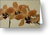 Exotic Greeting Cards - Sofia Orchid Greeting Card by Ben and Raisa Gertsberg