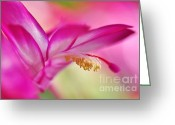 Stamen Greeting Cards - Soft and Delicate Cactus Bloom 2 Greeting Card by Kaye Menner