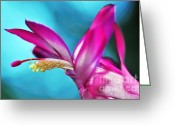 Flower Stamen Greeting Cards - Soft and Delicate Cactus Bloom 3 Greeting Card by Kaye Menner