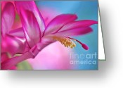 Stamen Greeting Cards - Soft and Delicate Cactus Bloom Greeting Card by Kaye Menner