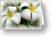 Raining Greeting Cards - Soft and Delicate Plumeria Greeting Card by Sabrina L Ryan
