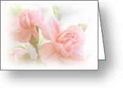 Pink Carnations Greeting Cards - Soft Carnations Greeting Card by Sharon Lisa Clarke